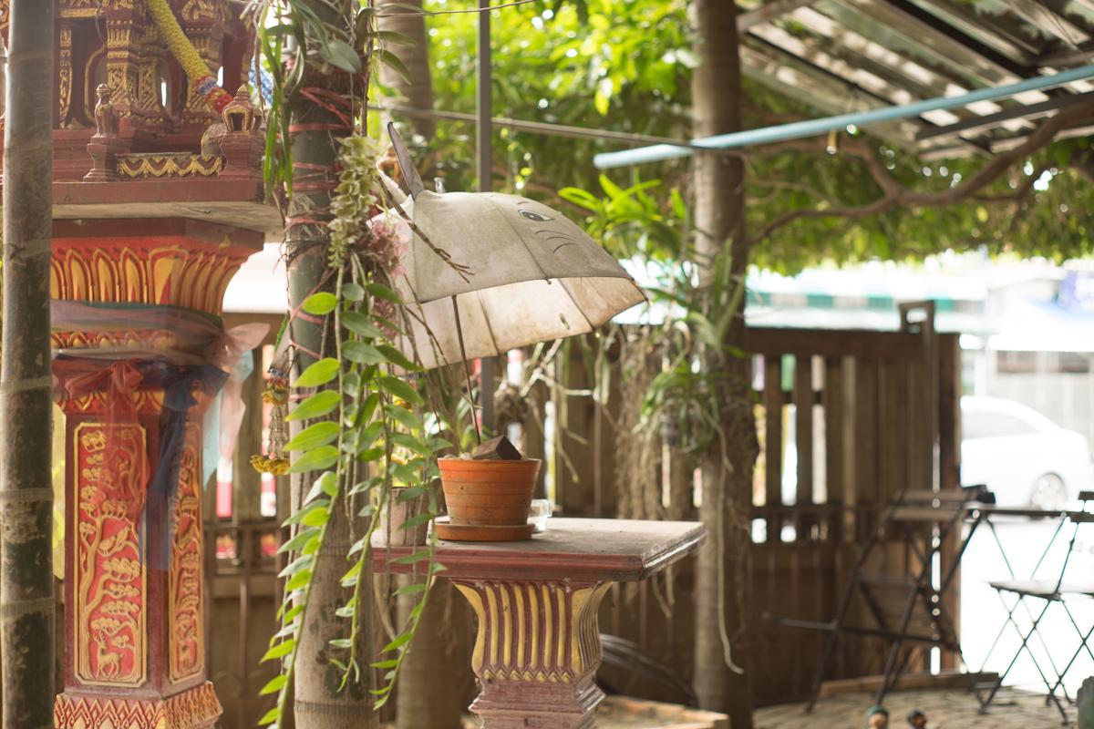 Phu Thaya Coffee Phayao Thailand